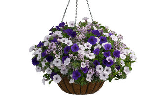 Velvet Skies - Hanging Basket