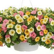gardengate_supertuniabermudabeach_honey_limoncello_hb_2016_1.jpg