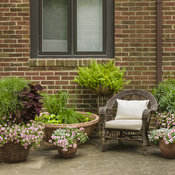 superbells_double_orchid_patio_2017_23.jpg