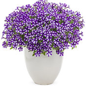 supertunia_violet_star_charm_beautymono.jpg