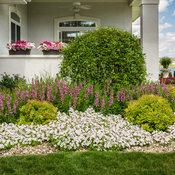 vista_petunia_gardens_171.jpg