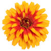 Sweet Tooth Candy Corn - Zinnia