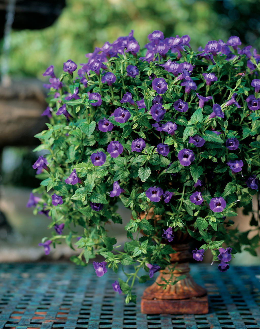 Summer wave large violet wishbone flower torenia hybrid 66889g izmirmasajfo Images