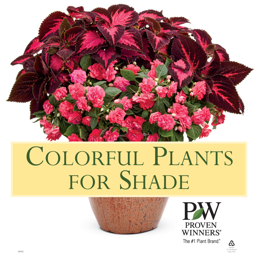 "colorful plants for shade' x"" sign  proven winners, Beautiful flower"