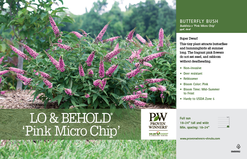 Buddleia Lo Amp Behold 174 Pink Micro Chip Butterfly Bush