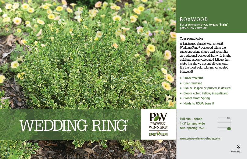 Buxus Wedding Ring 174 Boxwood 11x7 Quot Variety Benchcard